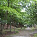 kuzugayato003